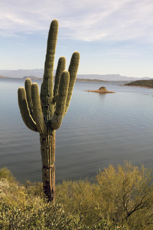 Einsamer Arizona-Wüsten-Kaktus und See stockfotografie