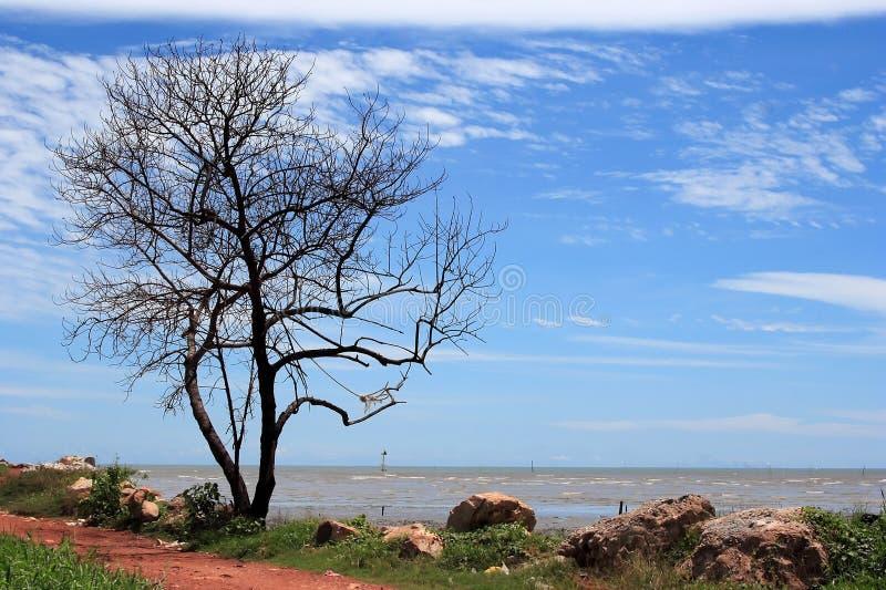 Einsamer Baum stockbild