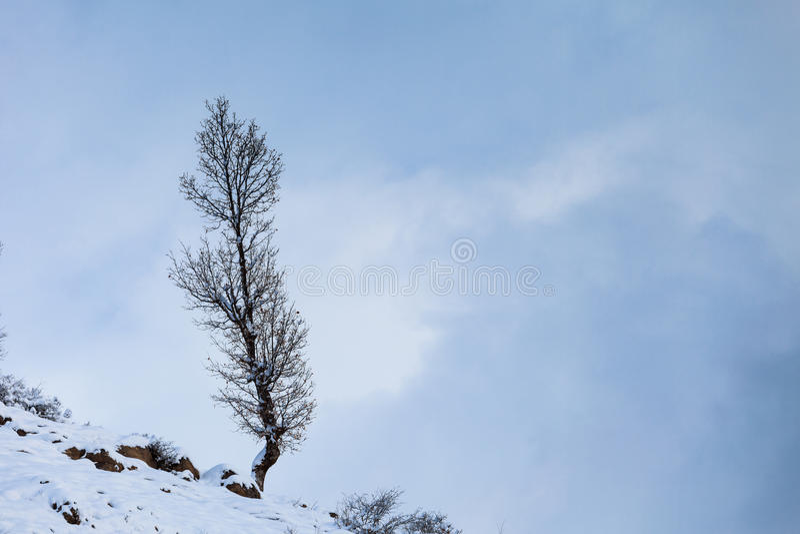 Einsamer Baum auf dem Berghang stockfotografie
