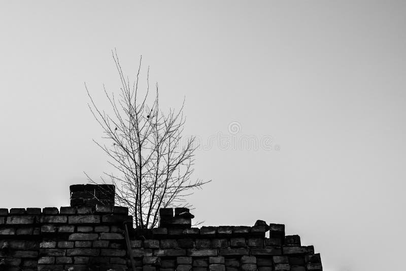 Einsamer Baum auf dem Dach stockbilder