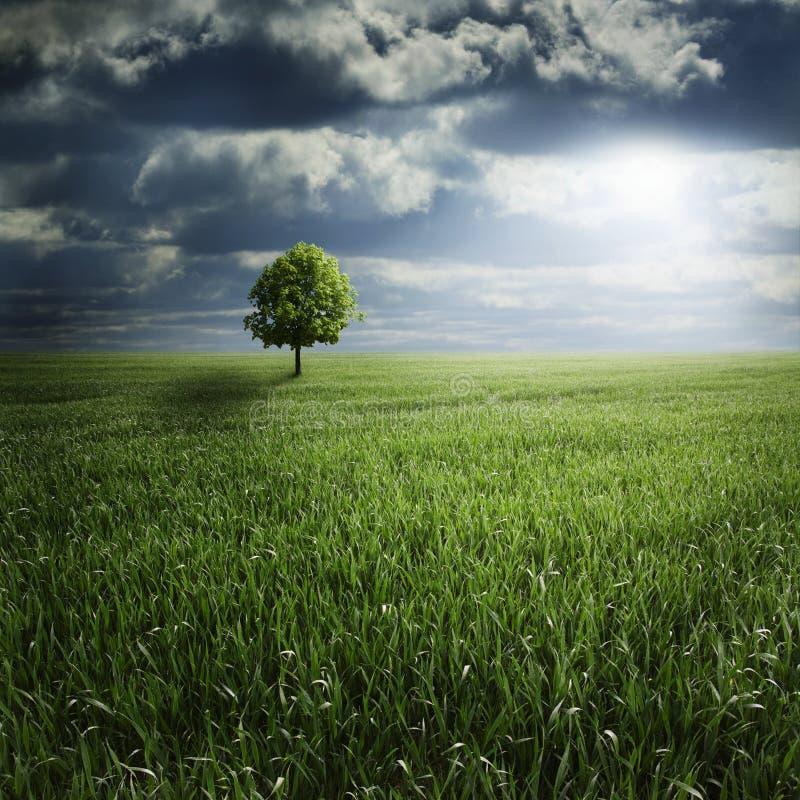 Einsamer Baum auf dem Gebiet mit Sturm stockfotografie