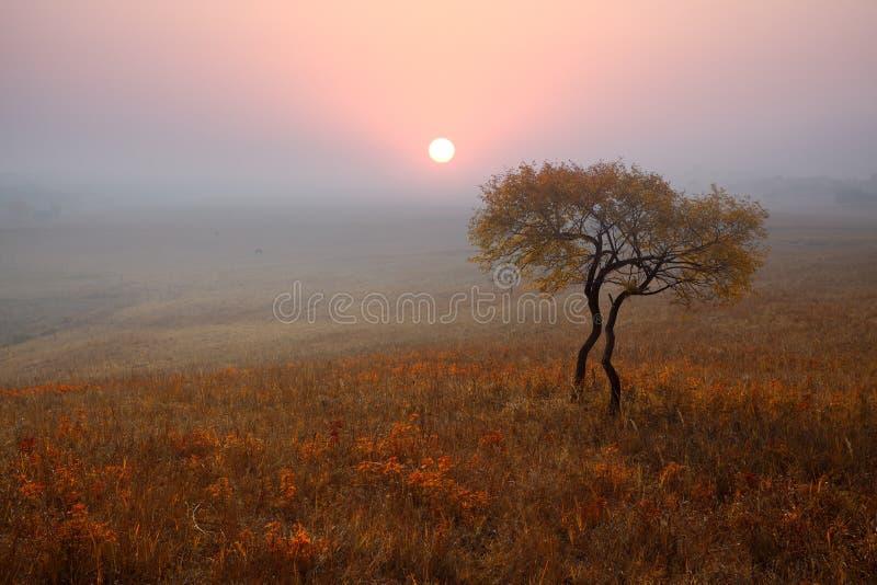 Einsamer Baum auf dem Grasland im Herbst stockfoto
