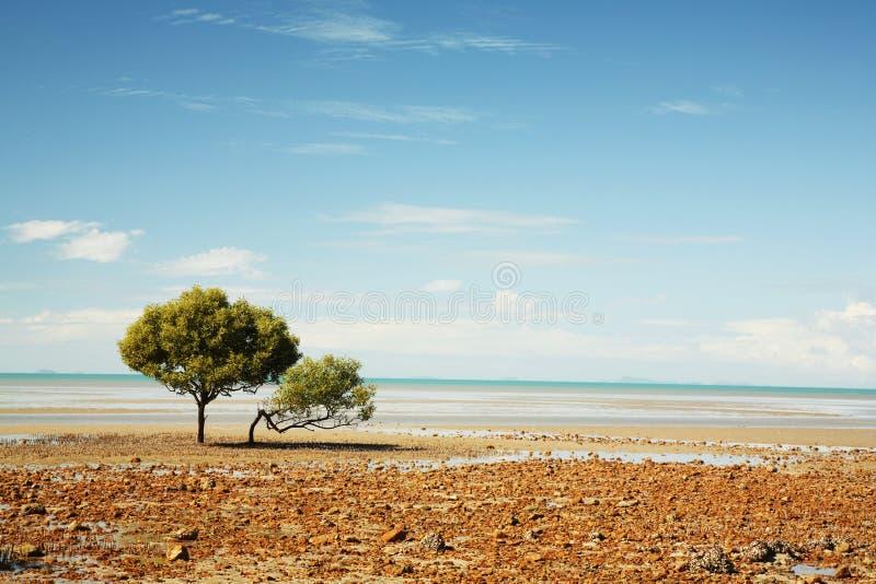 Einsamer Baum auf dem Strand lizenzfreies stockfoto