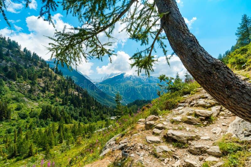 Einsamer Baum auf der Steigung des Berges, Alpen in Frankreich stockbilder