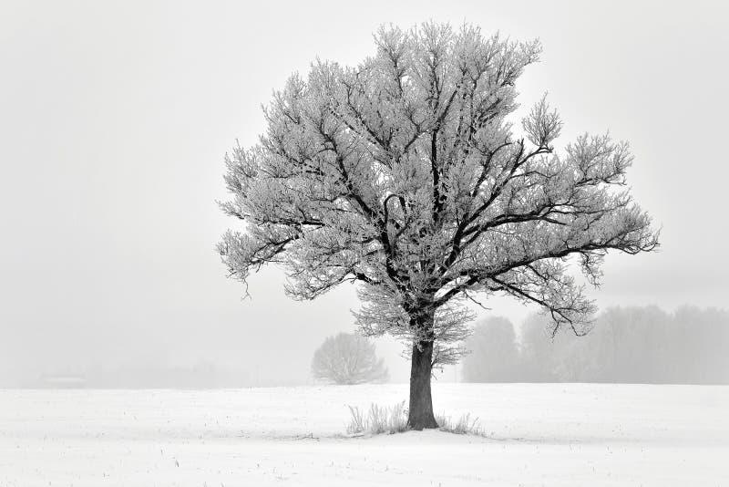 Einsamer Baum auf einem Feld Litauen-Landschaft stockfotos