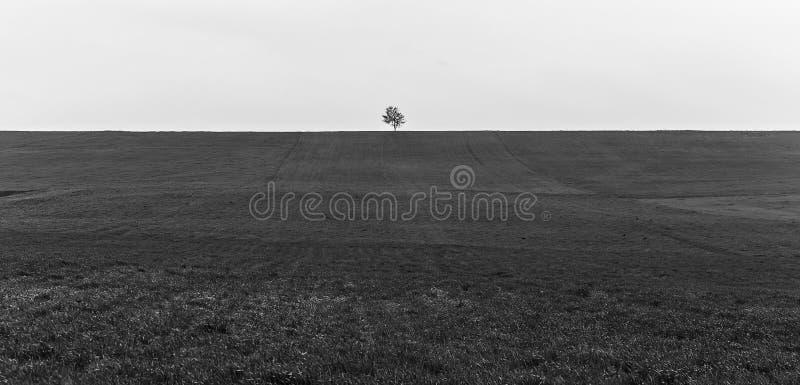 Einsamer Baum auf einem Frühlingsfeld stockfotografie