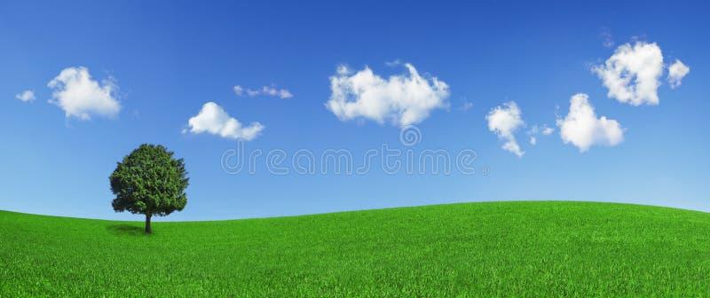 Einsamer Baum auf einem grünen Feld lizenzfreies stockfoto