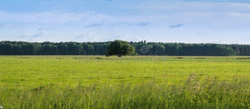 Einsamer Baum auf einem grünen hellen Feld stockfotografie