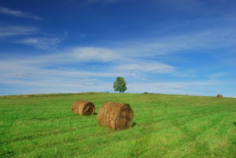 Einsamer Baum auf Feld mit Heuballen lizenzfreie stockbilder