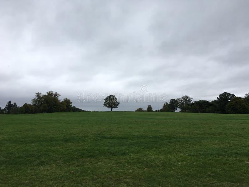 Einsamer Baum auf grünem Feld stockfoto