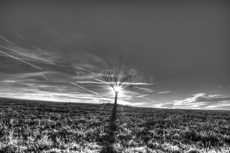 Einsamer Baum auf Rasenfläche lizenzfreie stockfotos