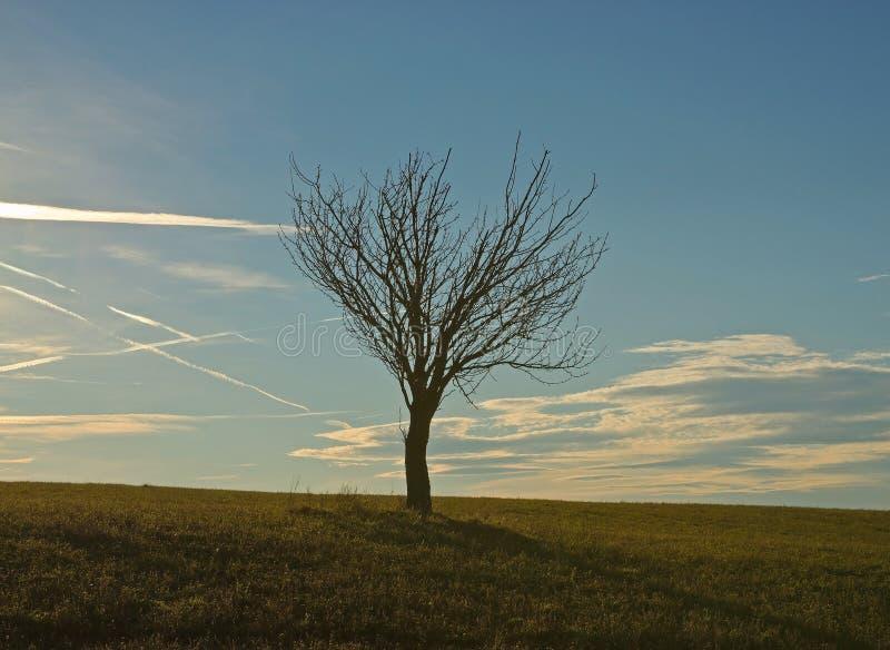 Einsamer Baum auf Rasenfläche lizenzfreie stockbilder