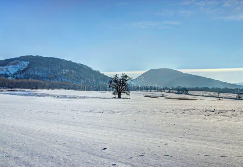 Einsamer Baum auf Schnee-Feld stockfotografie