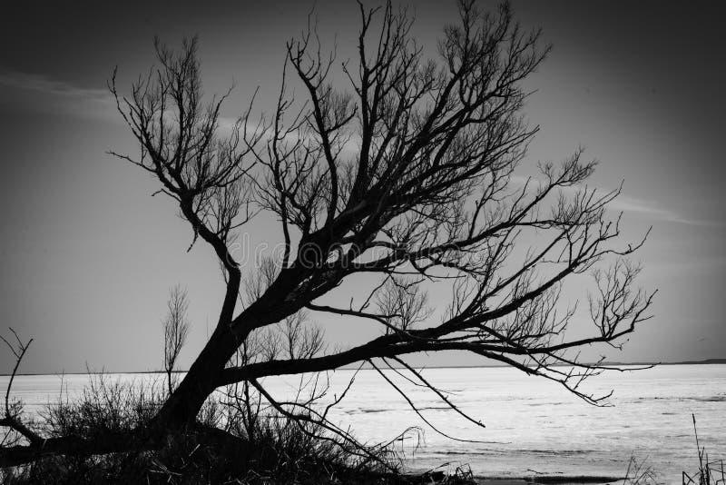 Einsamer Baum auf See Nipissing lizenzfreie stockbilder