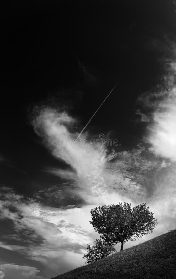 Einsamer Baum auf Wiese mit weißen Wolken oben stockfoto