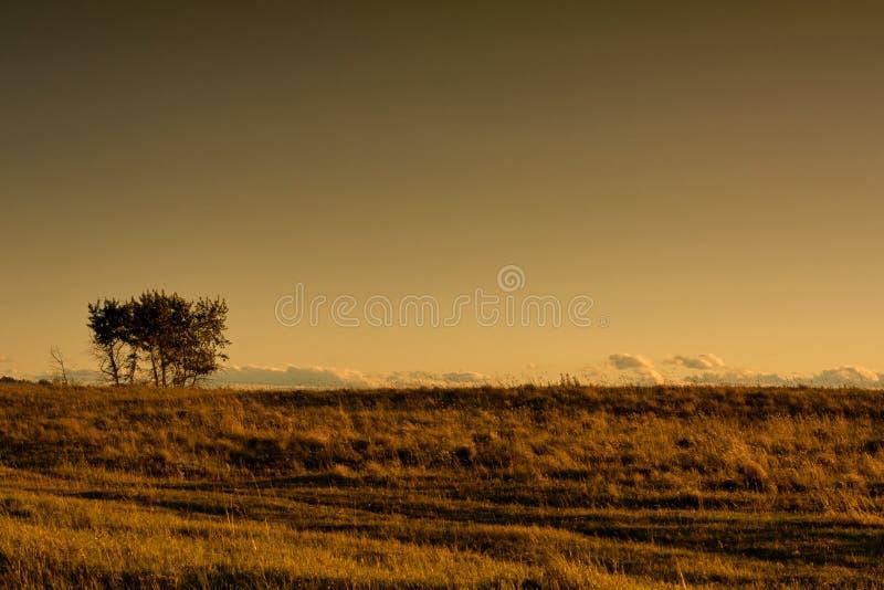Einsamer Baum in den warmen Wiesen stockfotografie