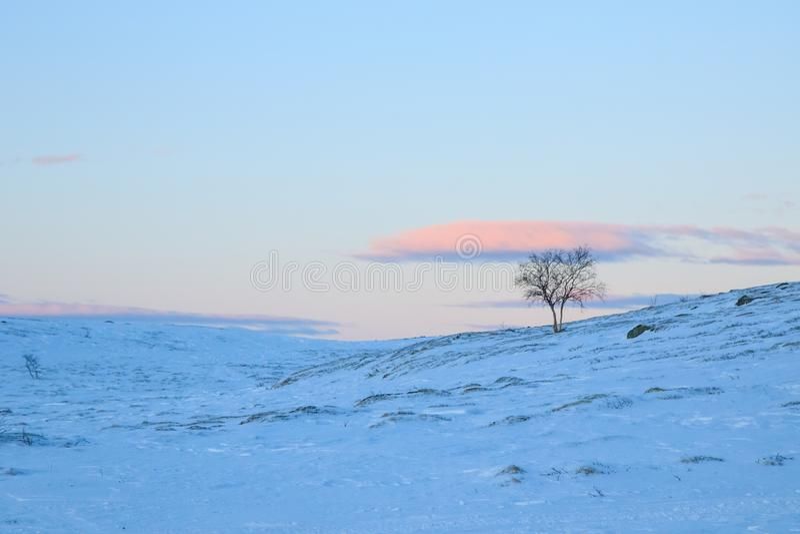 Einsamer Baum in der schneebedeckten Klippe der Gebirgshügel abwärts auf einem blauen rosa Sonnenuntergangabendhimmel mit Wolkenh stockfoto