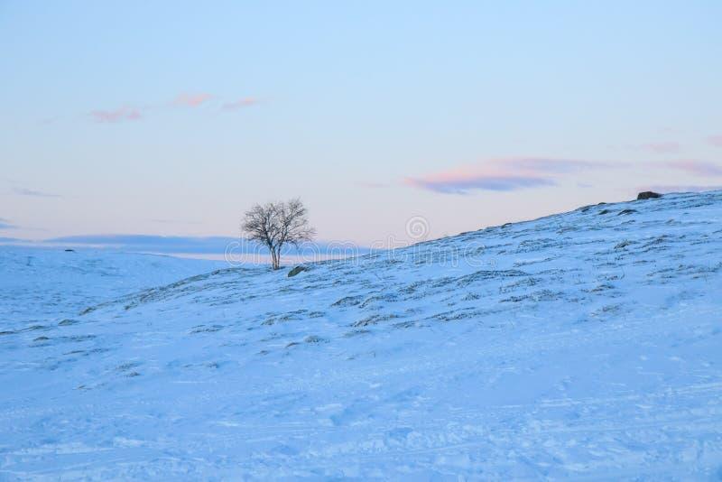 Einsamer Baum in der schneebedeckten Klippe der Gebirgshügel abwärts auf einem blauen rosa Sonnenuntergangabendhimmel mit Wolkenh lizenzfreie stockbilder