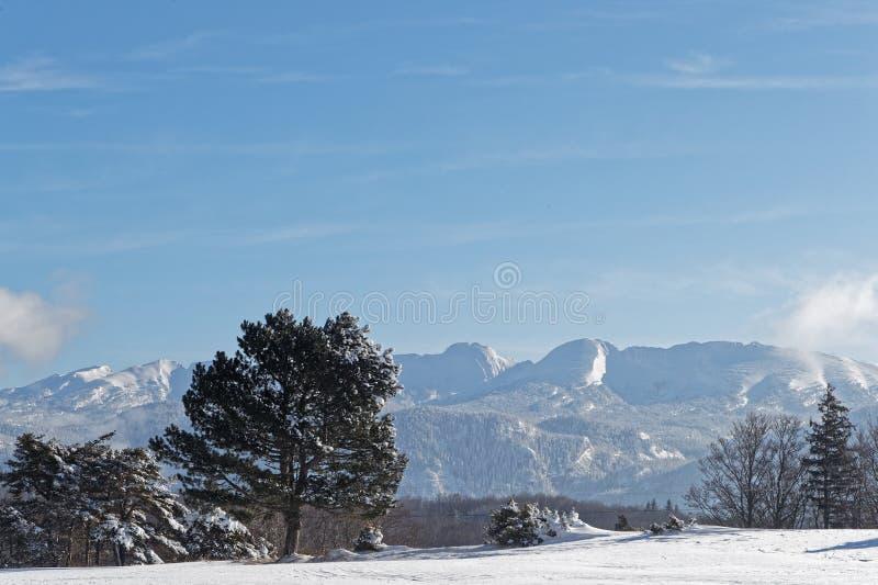Einsamer Baum in einer Winterlandschaft auf der Hochebene von Vercors stockfoto
