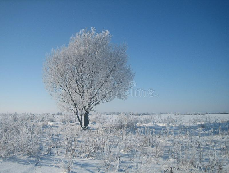 Einsamer Baum im Frost in den leeren schneebedeckten Steppen inmitten eines kalten Winters an einem vollen Tag stockfoto