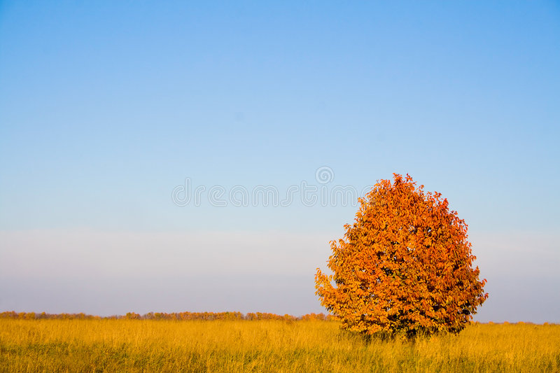 Einsamer Baum im Herbst stockbild