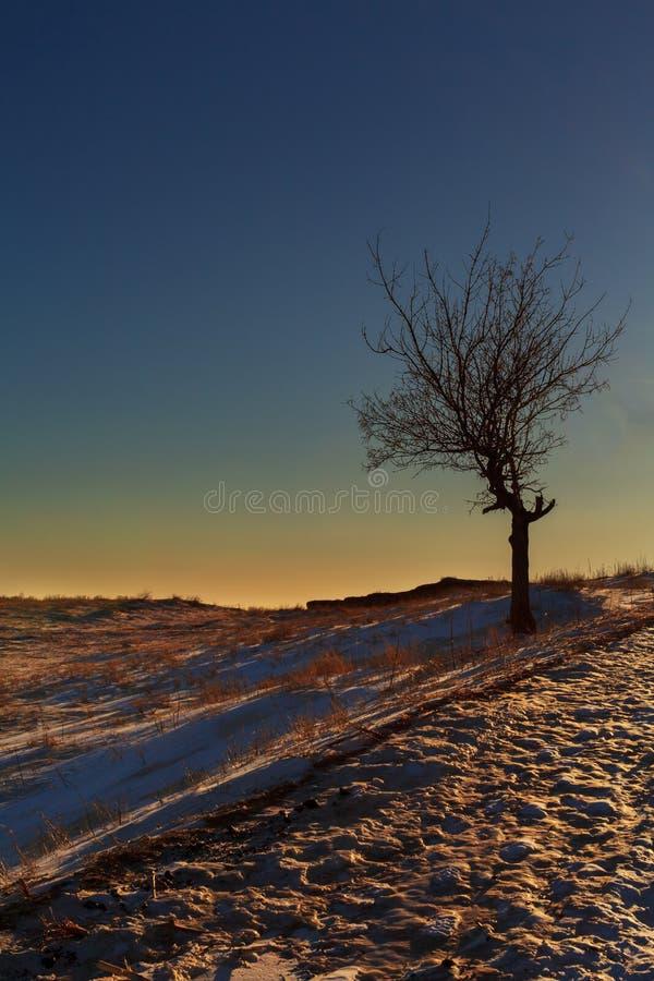 Einsamer Baum im späten Sonnenlicht stockbild