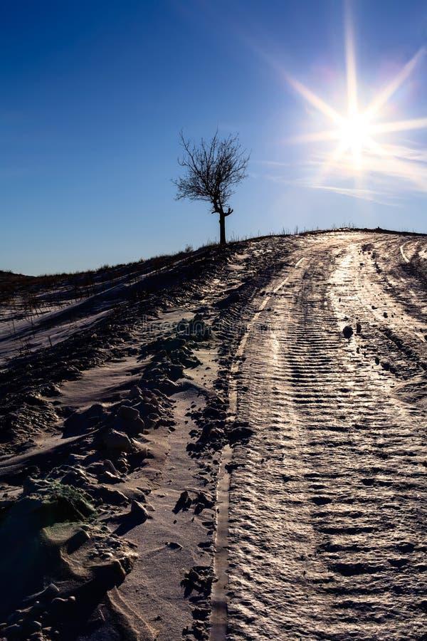 Einsamer Baum im späten Sonnenlicht lizenzfreie stockfotos