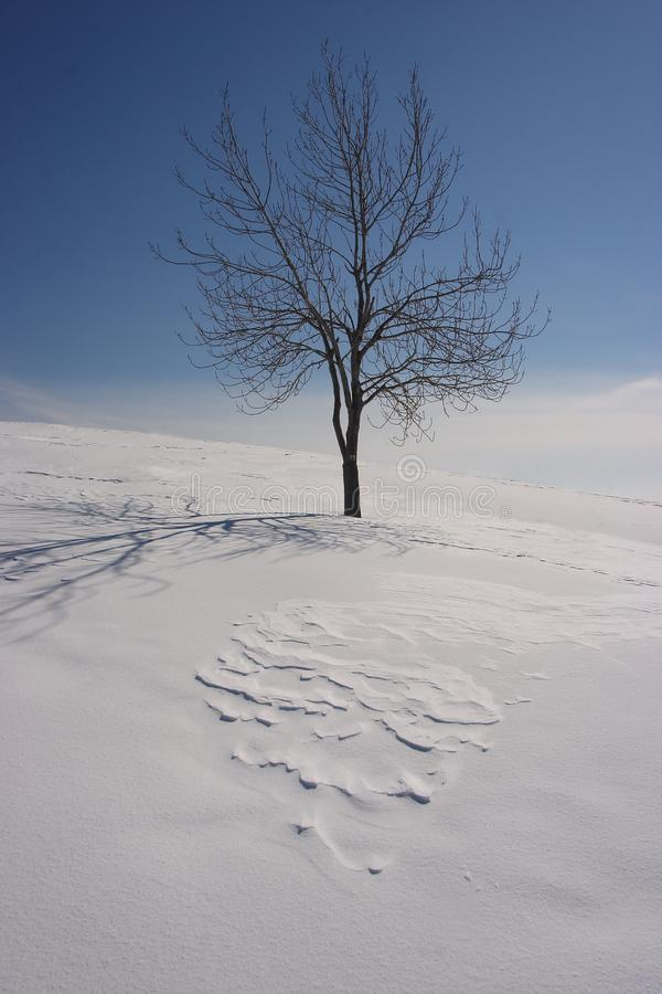 Einsamer Baum im Winter lizenzfreie stockbilder