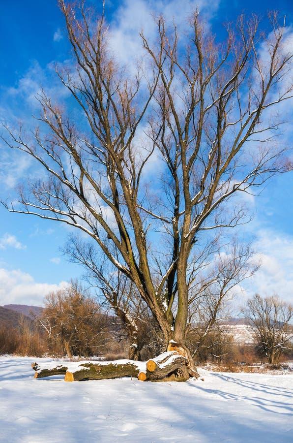 Einsamer Baum im Winter gegen den blauen Himmel lizenzfreie stockfotografie