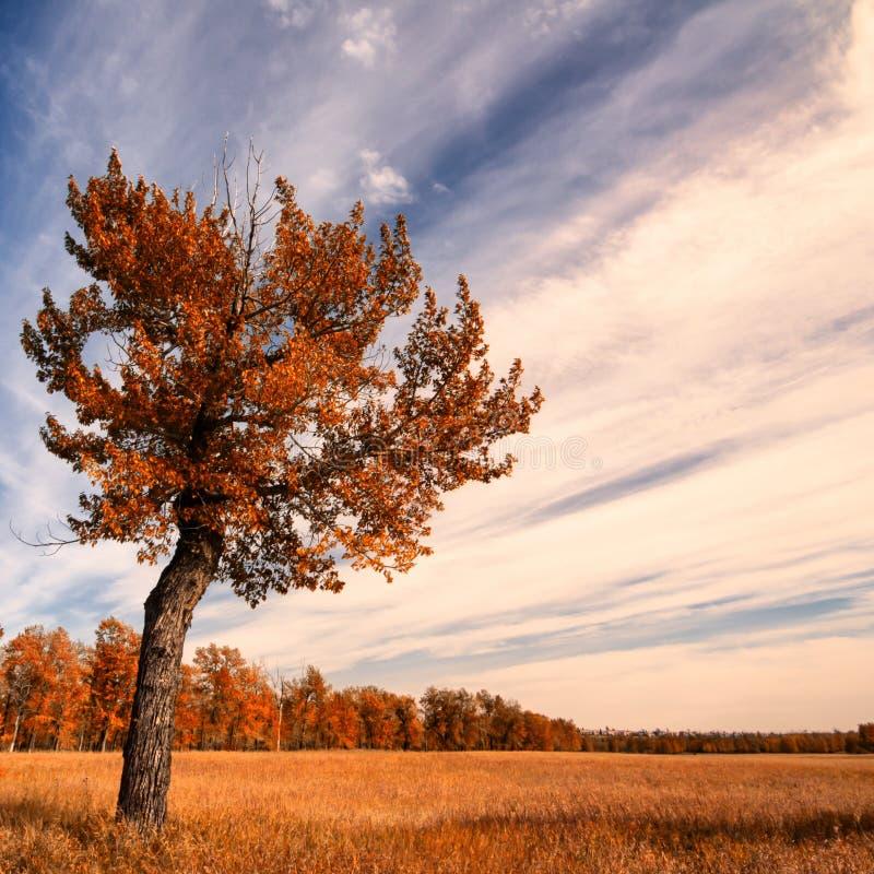 Einsamer Baum mit einem Herbst-Himmel lizenzfreies stockfoto