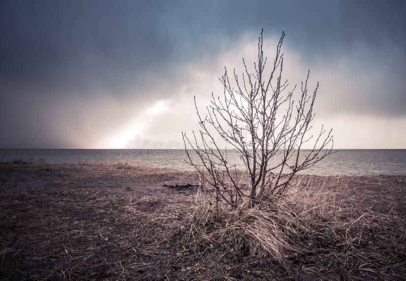 Einsamer Baum nach dem Sturm lizenzfreies stockbild