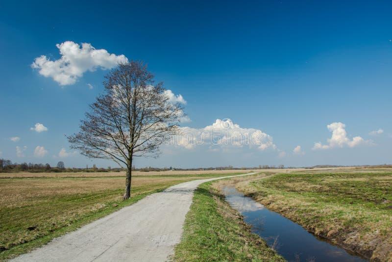 Einsamer Baum nahe bei Schotterstraße, Wasserkanal und Wolken auf blauem Himmel lizenzfreie stockbilder