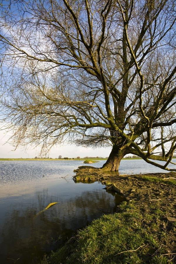 Einsamer Baum in See stockbilder