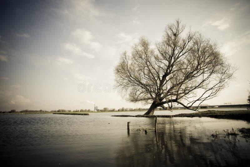 Einsamer Baum in See lizenzfreie stockfotos