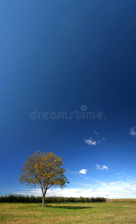 Einsamer Baum unter blauem Himmel stockbild