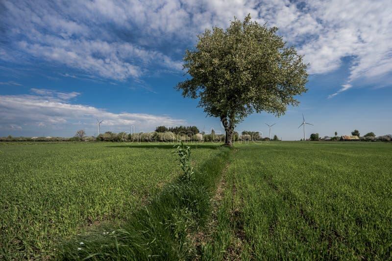 Einsamer Baum unter den Feldern lizenzfreies stockbild