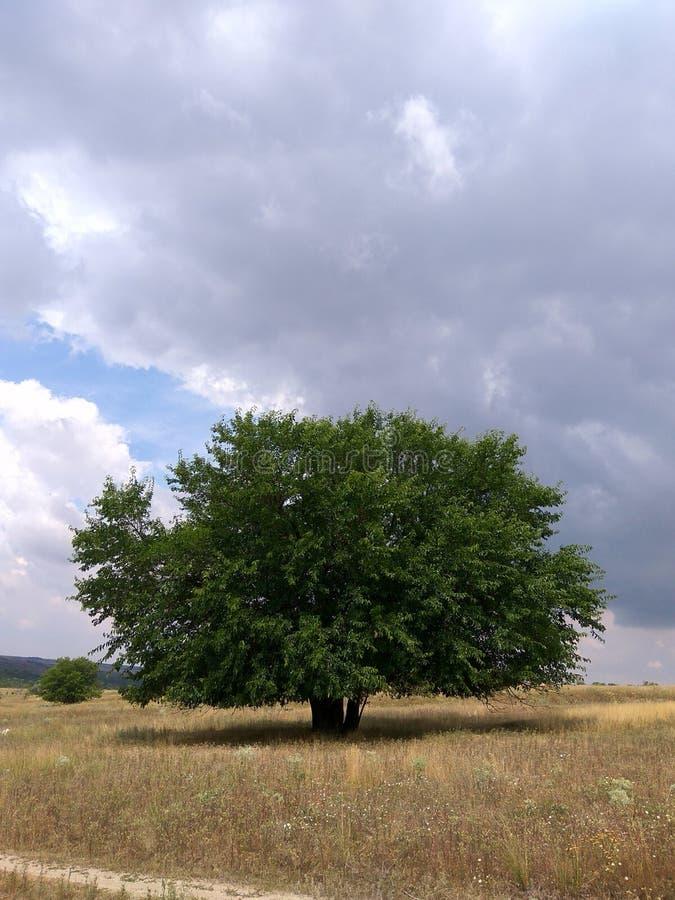 Einsamer Baum unter dunklen Wolken lizenzfreie stockfotografie