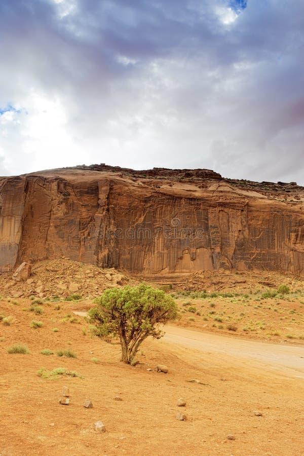 Einsamer Baum vor einem der Buttes im einzigartigen Monument Val stockbilder