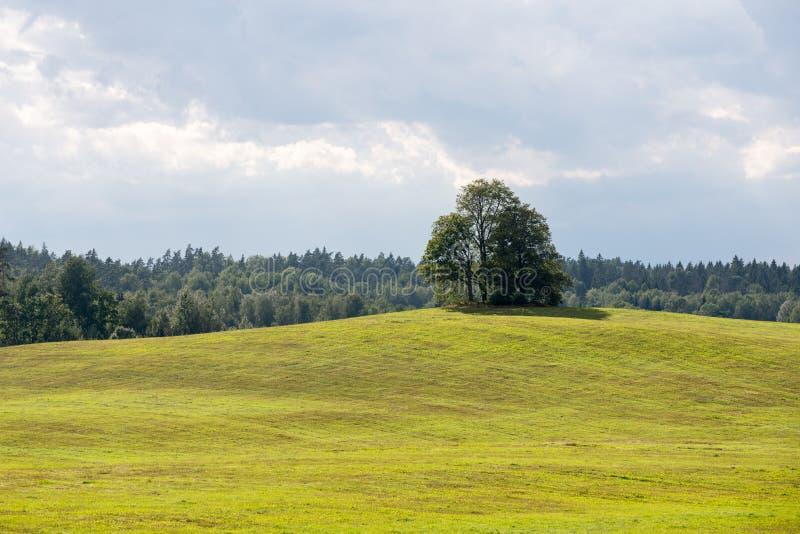 Einsamer Baum weit auf dem gelben Gebiet lizenzfreies stockfoto