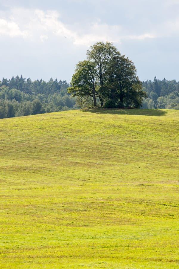Einsamer Baum weit auf dem gelben Gebiet stockfotografie