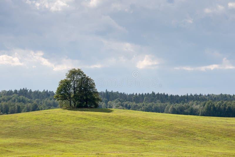 Einsamer Baum weit auf dem gelben Gebiet stockbilder