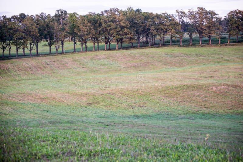 Einsamer Baum weit auf dem gelben Gebiet lizenzfreie stockfotografie