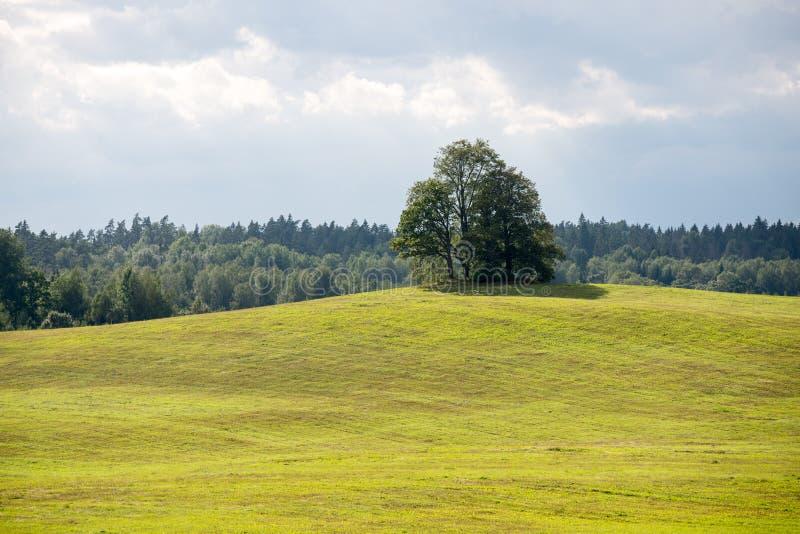 Einsamer Baum weit auf dem gelben Gebiet lizenzfreies stockbild