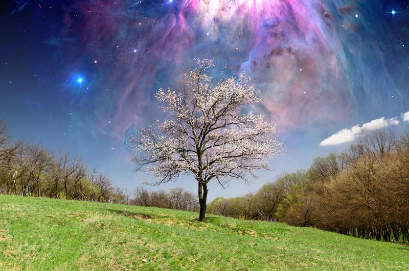 Einsamer blühender Baum lizenzfreie stockfotos