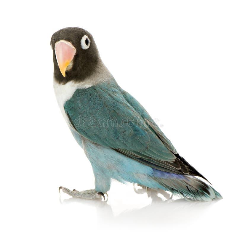 Einsamer farbiger Papagei lizenzfreie stockbilder