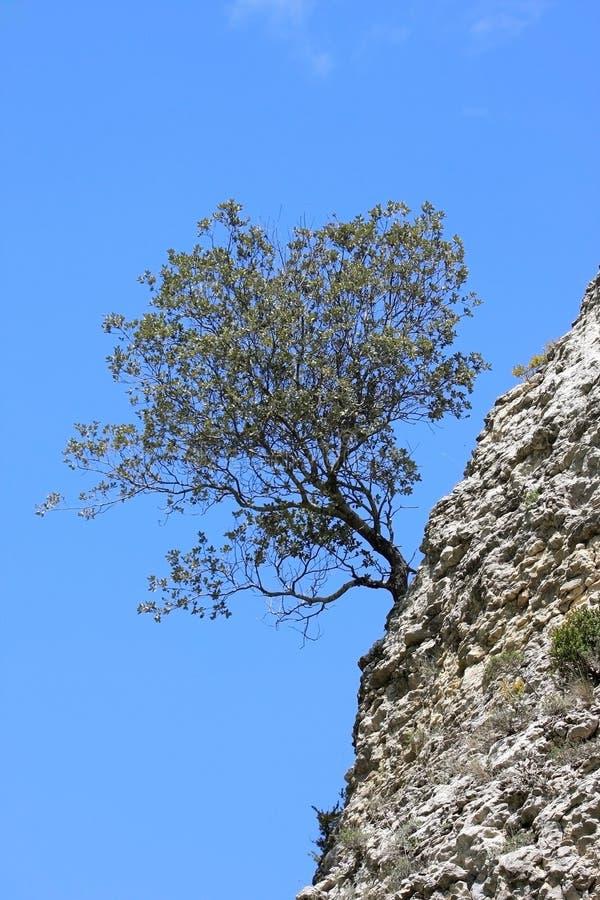Einsamer Frühlingsbaum auf den Felsen in Spanien stockbilder