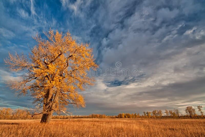 Einsamer Herbst-Baum stockfoto