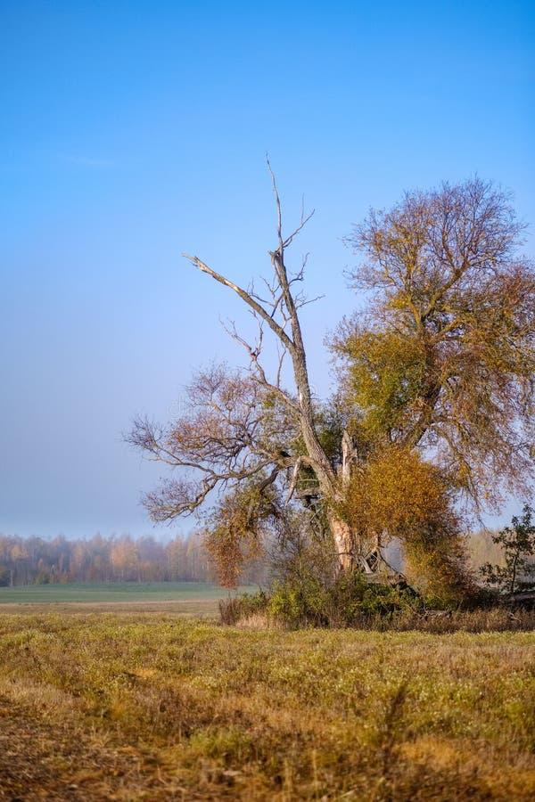 einsamer Herbstbaum in der Mitte des leeren Feldes stockfotografie