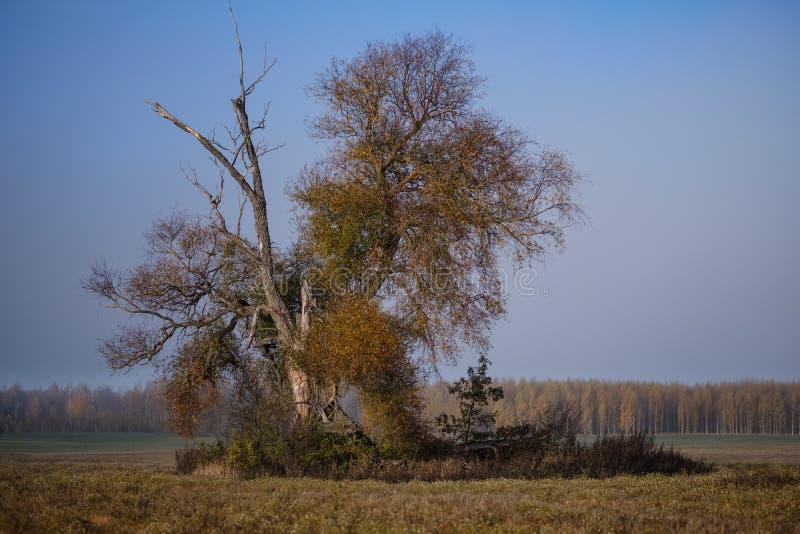 einsamer Herbstbaum in der Mitte des leeren Feldes stockfotos