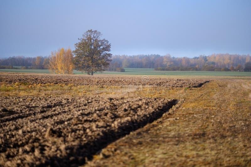 einsamer Herbstbaum in der Mitte des leeren Feldes stockbild